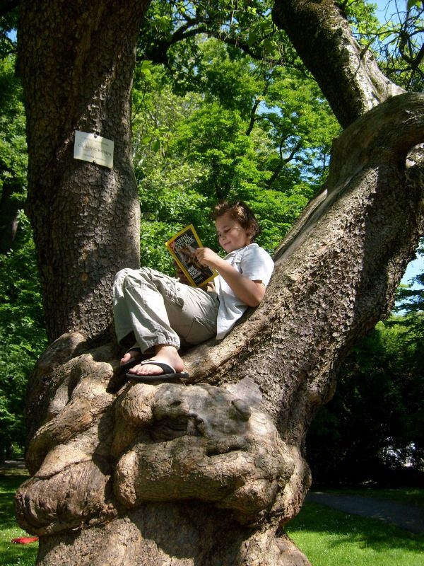 kid reading in tree