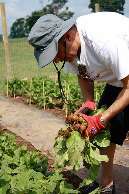 Chef Mitch Prensky harvests his beets