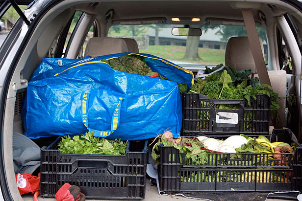 Car filled with greens