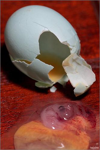 Gross egg