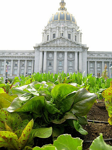 San Francisco city hall and lettuces