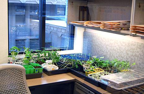Seedlings in a cubicle