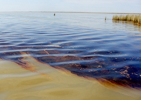 Oil in Gulf water.