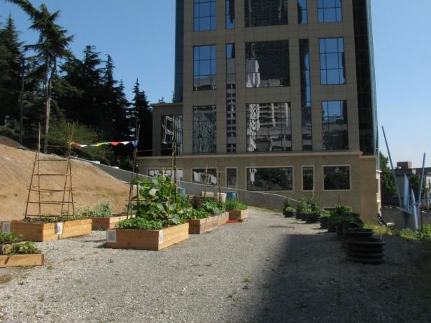 Goat Hill Giving Garden
