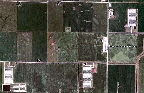 Satellite image of chicken CAFOs