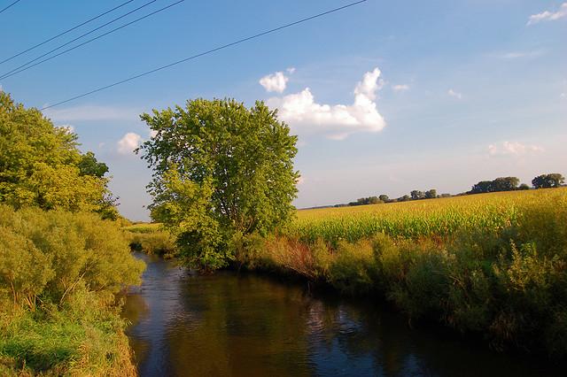 Corn field next to stream