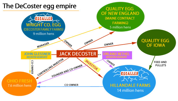 Egg industry infographic