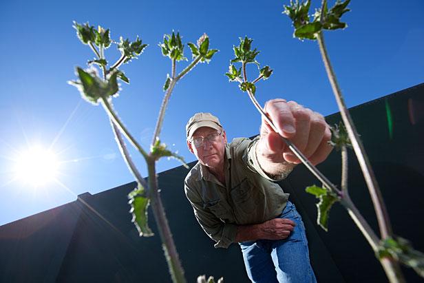 Gene Fredericks with Weeds