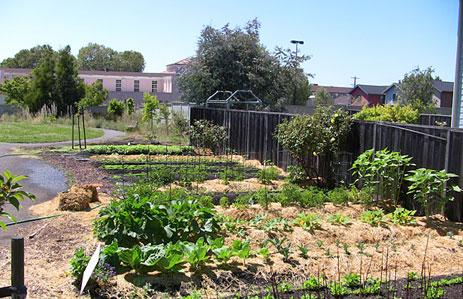 Phat beets garden