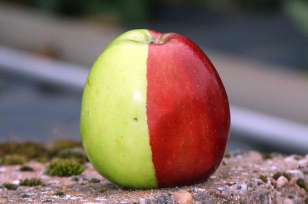 Half green, half red apple