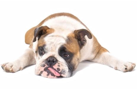 a sad, sad puppy