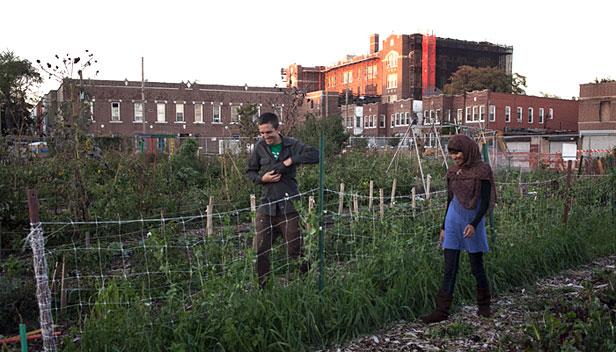 Urban farm in NYC