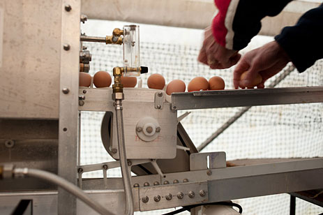 Eggwashing operation