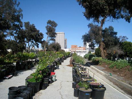 Hayes Valley urban farm in San Francisco