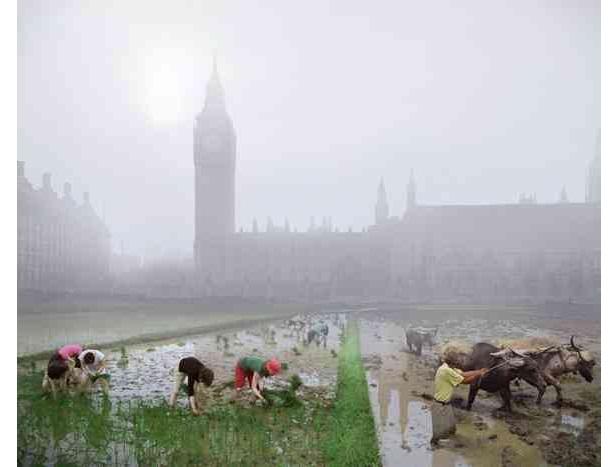 Parliament Square rice paddies