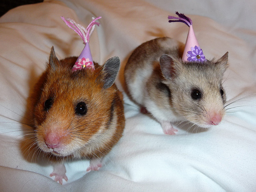 Party mice.