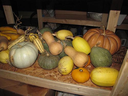 Pumpkins, squash, etc.