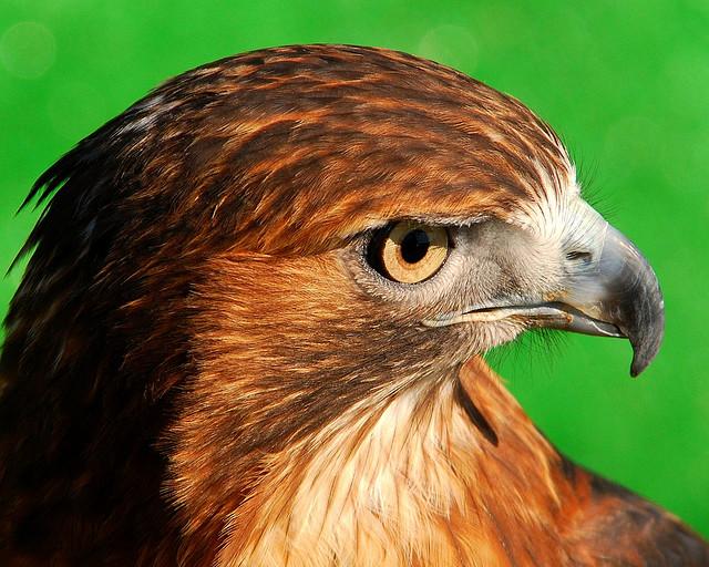 climate hawk