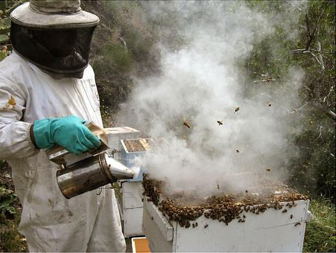 Beesmoker