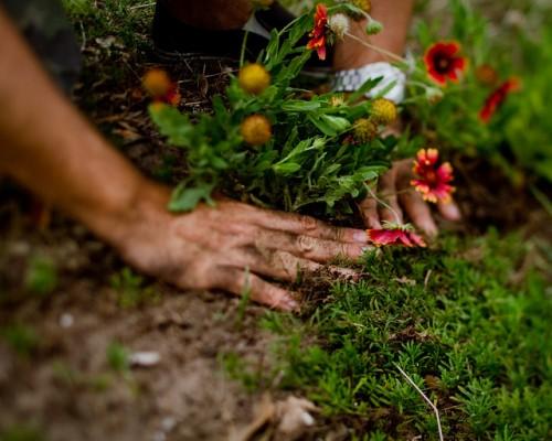 Planting hands.