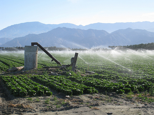 Irrigation in Southern California
