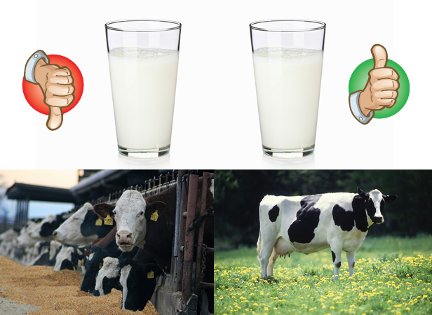 U.K. organic milk better for you than conventional, thanks to cows'  grass-based diet