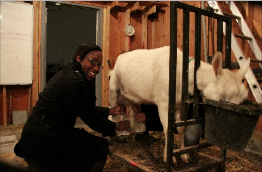 The author, milking a goat.