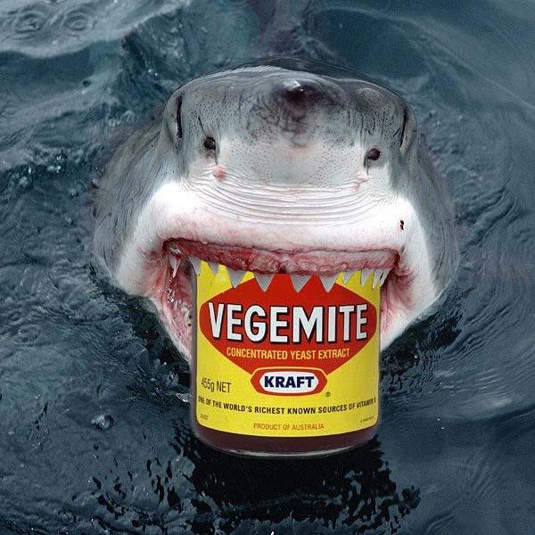 Horrible shark