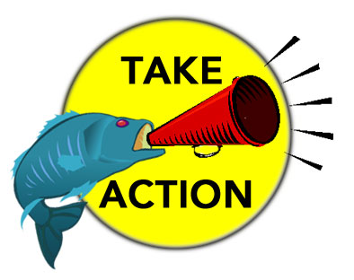 Take Action fish graphic