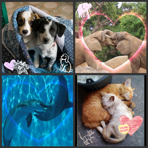 Animal friends: puppies, elephants, dolphins, kittens