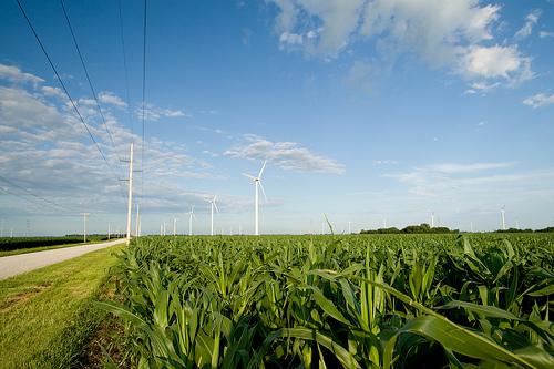 corn and windmills