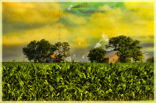 Corn of plenty!