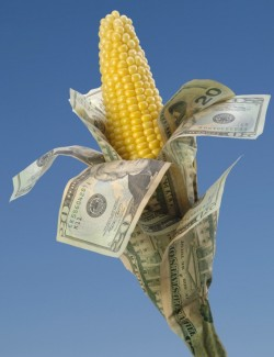 corn wrapped in money