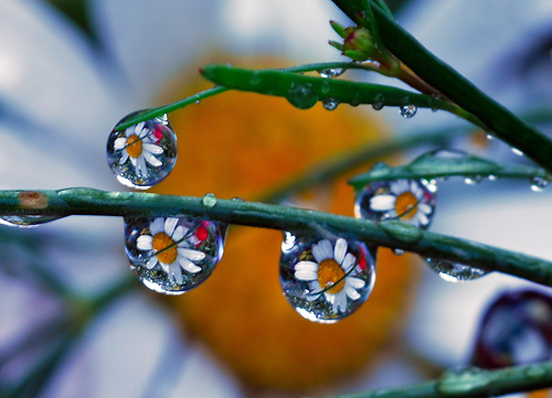 Flower and droplets.
