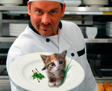 Kitten on a platter.