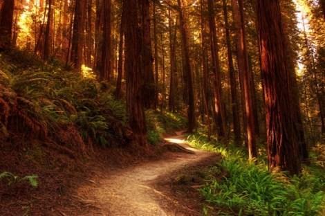 redwoods_justin_kern.jpg