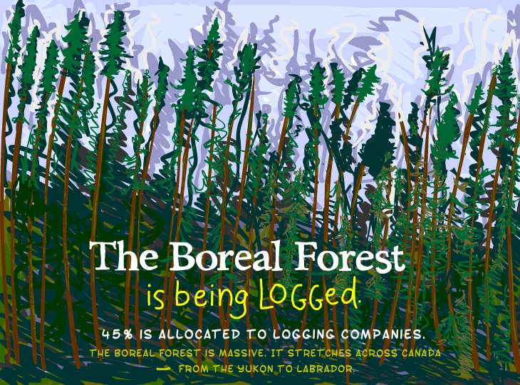 The boreal forest is being logged. 45 percent is allocated to logging companies. The boreal forest is massive. It stretches across Canada from the Yukon to Labrador.