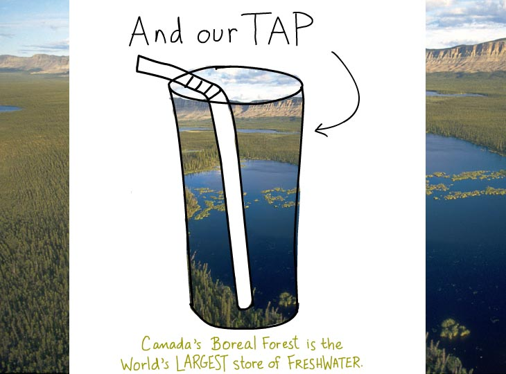 And our tap water. Canada's boreal forest is the world's largest store of freshwater.