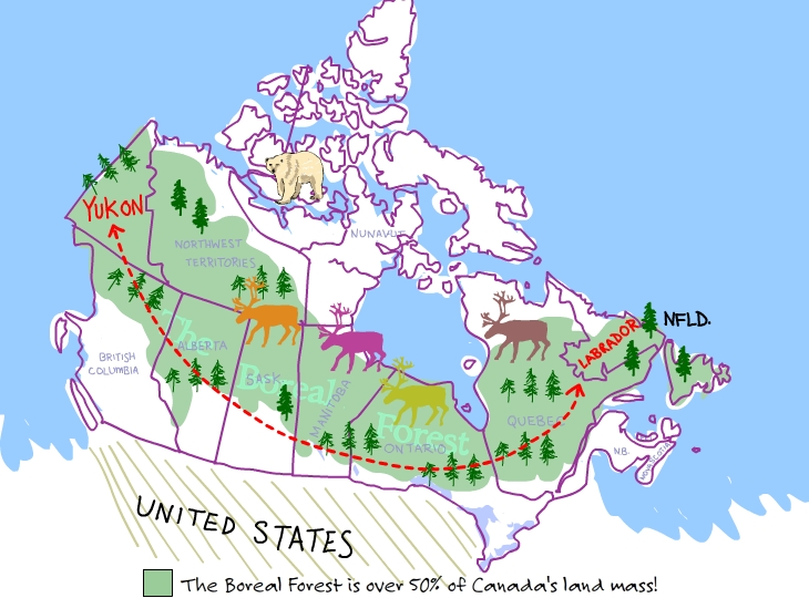 The boreal forest is over 50 percent of Canada's land mass!