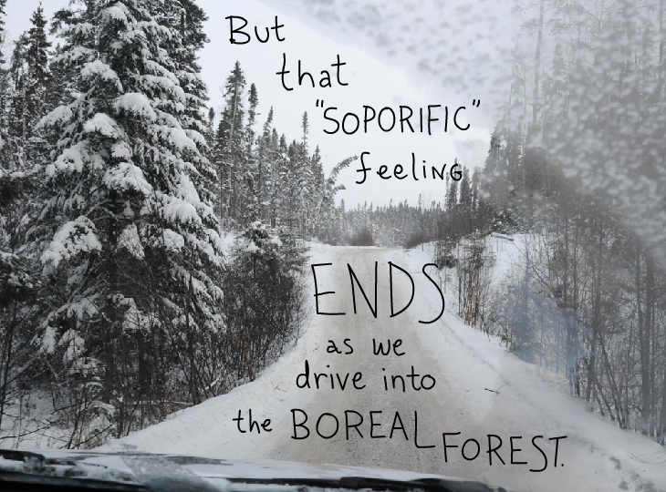 But that soporific feeling ends as we drive into the boreal forest.