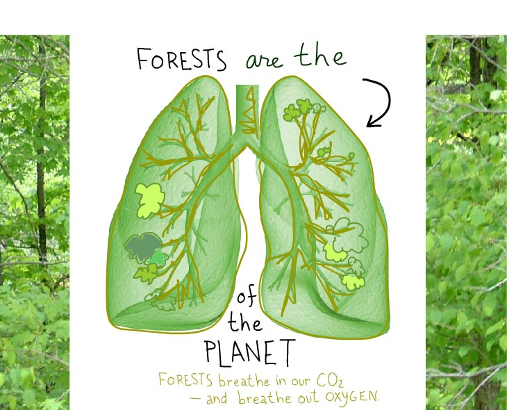 Forests are the lungs of the planet. Forests breath in our CO2 and breathe out oxygen.