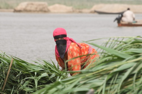 Woman harvesting reeds.