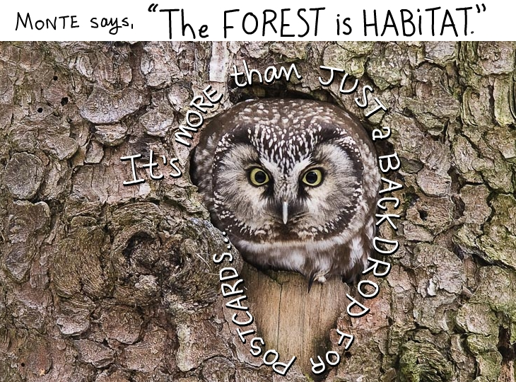 The forest is habitat. It's more than just a backdrop for postcards.