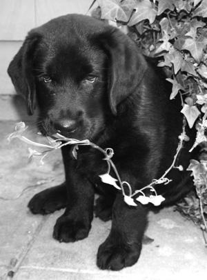 Cooper.
