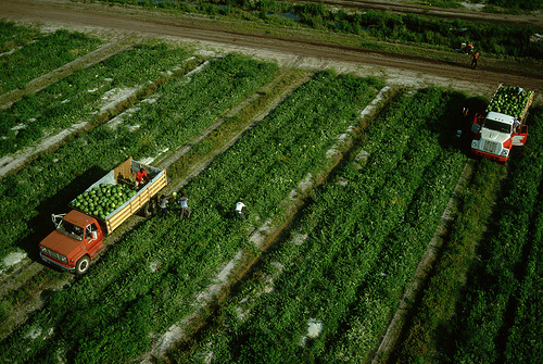 Farmworkers.