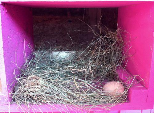 first_ egg