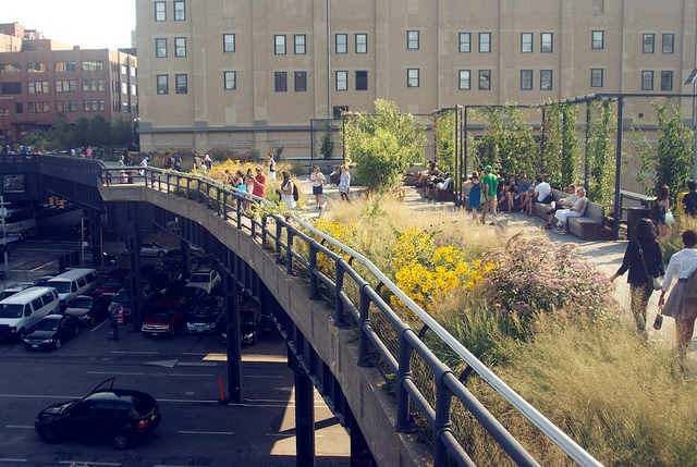 New York City's High Line Park. Nature is everywhere, if you know where to look.