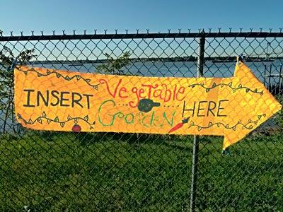 insert veggies here