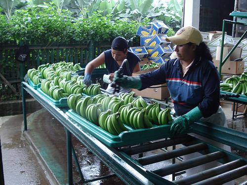 banan packing
