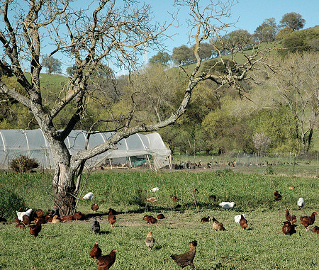 soul food farm